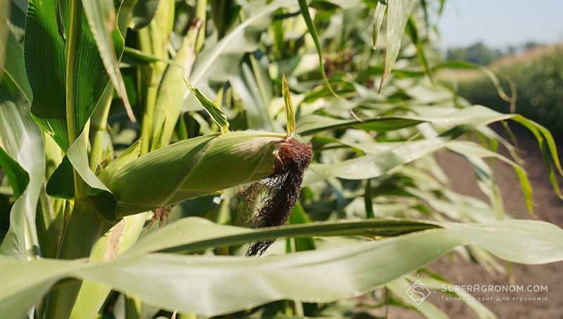 Кукурудза, соняшник, пшениця: усі практичні аспекти вирощування — в одному хабі фото 1 LNZ Group
