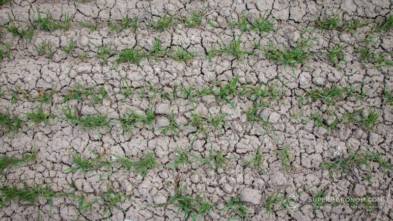 В південних областях починається посуха