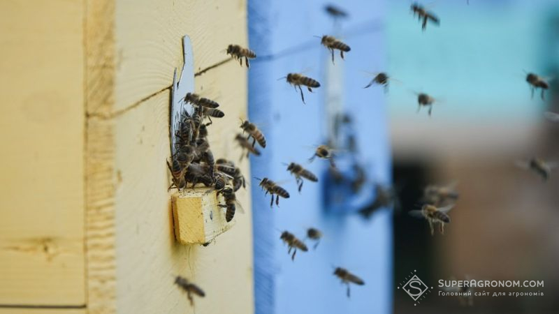 За отруєння бджіл пестицидами пропонують запровадити штрафи на кримінальну відповідальність