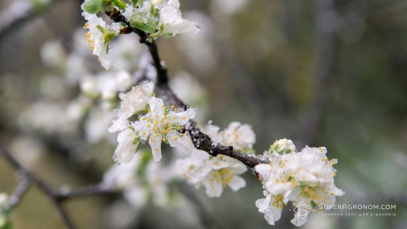 Мінап прогнозує падіння врожаю фруктів і ягід майже натретину