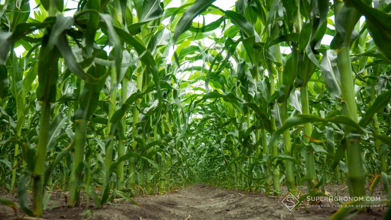 АгроПолігон LNZ Hub: Спостереження тривають, посіви захищені фото 2 LNZ Group