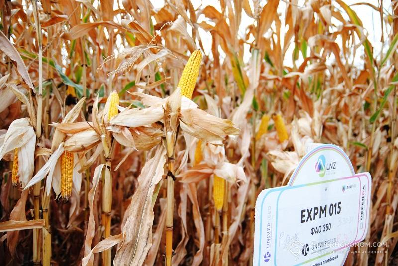 Кукурудза-2020: уроки та висновки зі складного сезону фото 5 LNZ Group