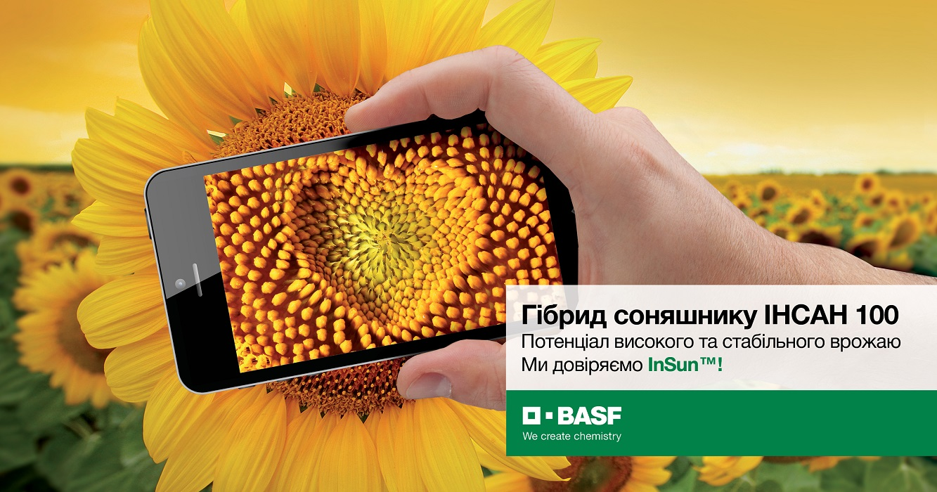 Гібрид соняшника BASF