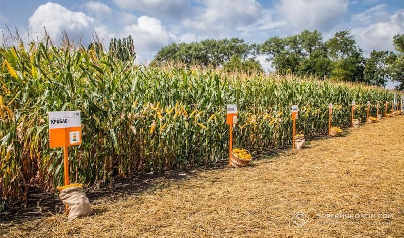 Демонстраційні посіви гібридів кукурудзи селекції KWS