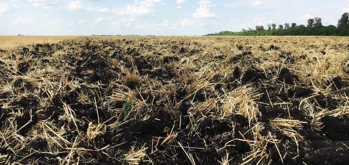 Пожнивні решитки кукурудзи